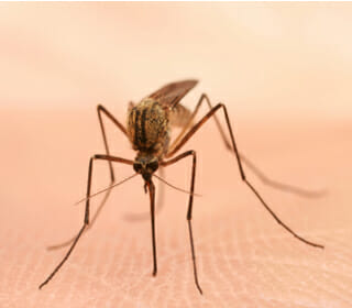 West Nile Outbreaks Spreading in Texas and Illinois