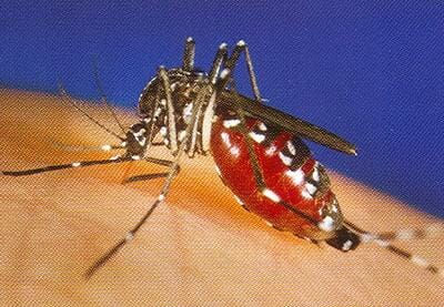 West Nile Virus Set To Have Record Year in the United States