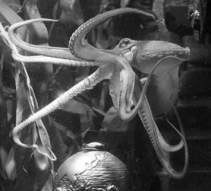 Paul the Psychic Octopus 2008 - 2010